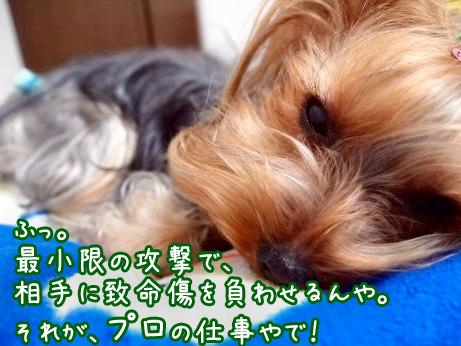 8_20100303190039.jpg