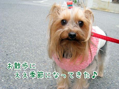 8_20100331170402.jpg