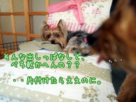 8_20100504172421.jpg
