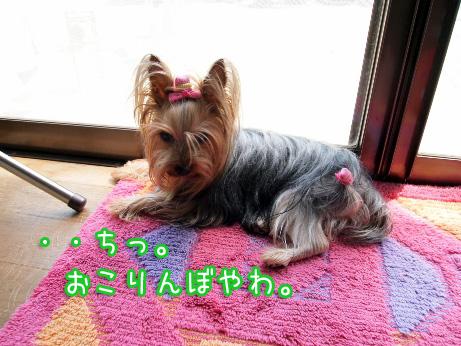 8_20100505184341.jpg