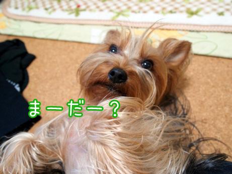 8_20100514193757.jpg