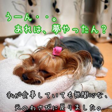 8_20100824180942.jpg