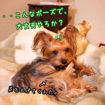 8_20101126193923.jpg