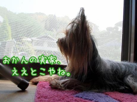 9_20100505184341.jpg