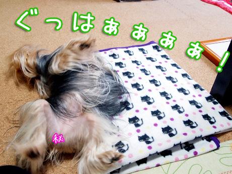 9_20100517192045.jpg
