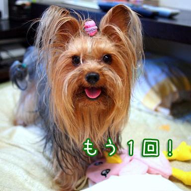 9_20100804191529.jpg