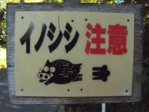 イノシシ注意_20100926