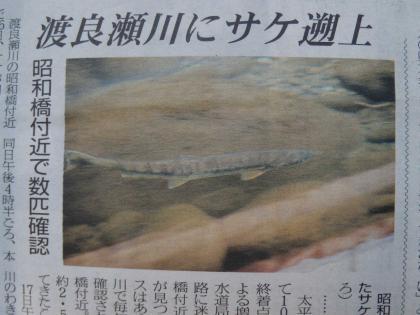 桐タイ昭和橋サケ_201117_DSCN0712