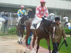 パドック:レッドレジーナと鮫島騎手