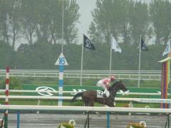 返し馬:レッドレジーナ