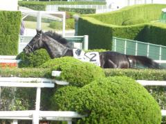 レース後:レッドバビロン放馬