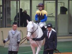 パドック:マシュマロと太宰騎手