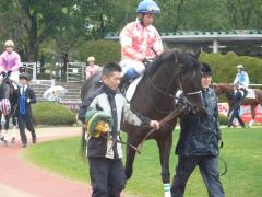 パドック:レッドバビロンと岩田騎手