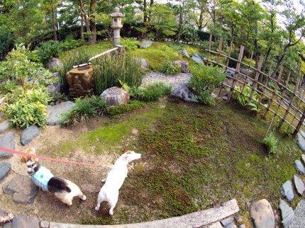 松涛庵の庭