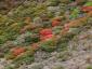 星生山南面の紅葉(アップ)