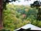写真4:大山寺紅葉