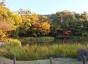 写真9、阿字ヶ池畔の紅葉