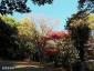 能見堂緑地1、紅葉と黄葉