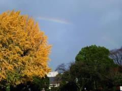 2010年12月3日8時半ごろの虹