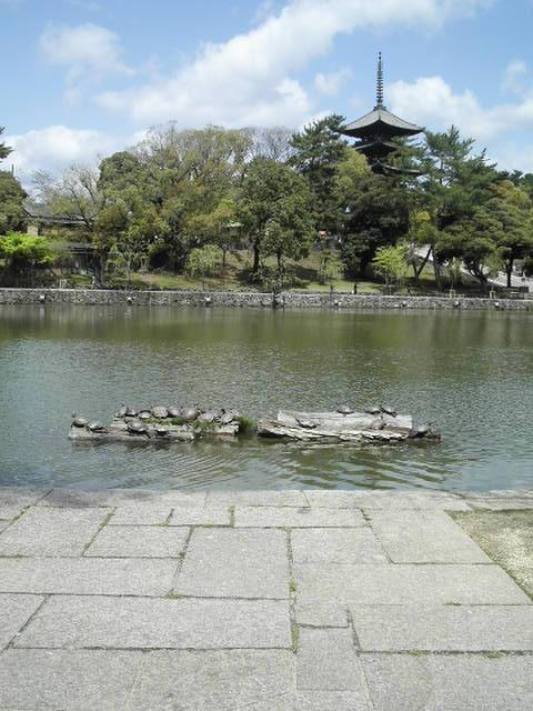 猿沢池から興福寺を望む。。