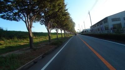早朝のR140並木