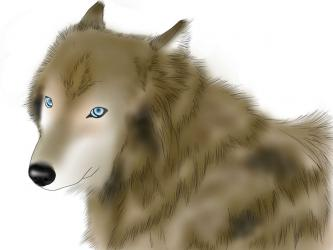 wolfsdog.jpg