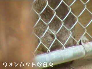 wd0053(お外でお昼寝)