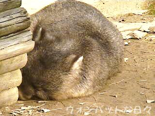 W0152(お外でお昼寝1)
