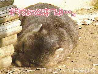 W0152(お外でお昼寝4)