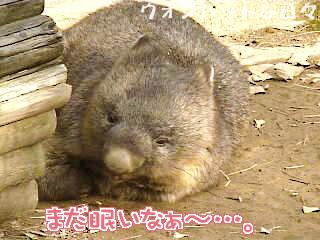 W0152(お外でお昼寝2)