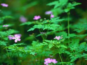 Forest+Flowers_convert_20110507133649.jpg
