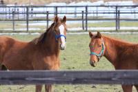 馬:カメラ目線