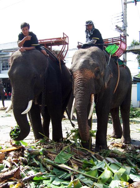 elephatride