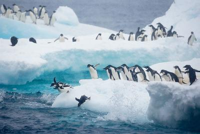 ice+sea+pengin+cold_400.jpg