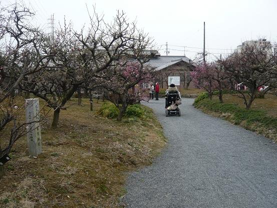 *梅の小道散策~*