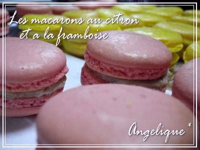 20110127macaron lemon+franbois02