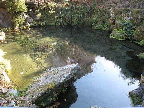 南足柄市三竹・いずみの湧水(の近くにあった池)