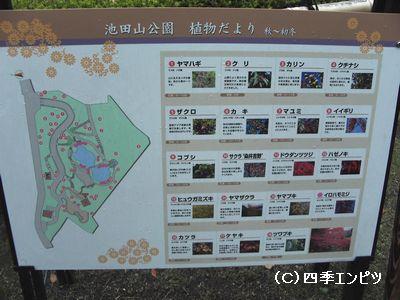 池田山公園 植物だより 案内板