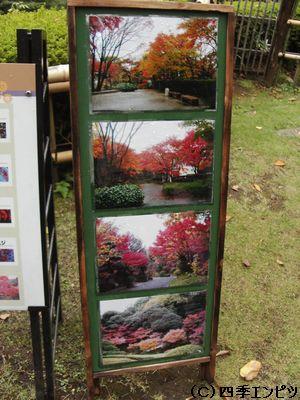 池田山公園 紅葉の様子 案内板