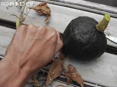 10月24日 かぼちゃ5