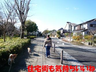 bP1120067.jpg