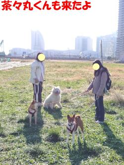 bP1120115.jpg