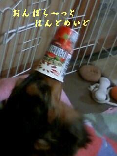 091113_ワンコ