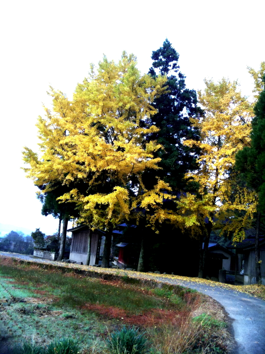 20101115.jpg