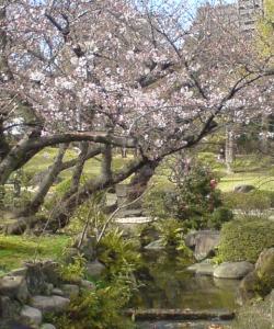 極楽の庭20100411141615