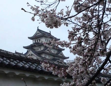 姫路城横さくら