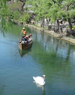 スワンと倉敷の川辺