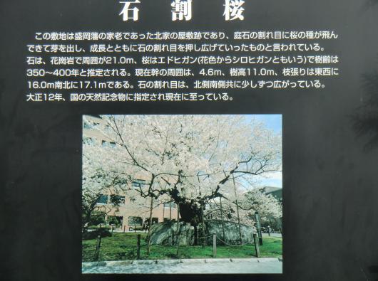 石割桜説明文