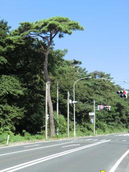 巣子の松街道