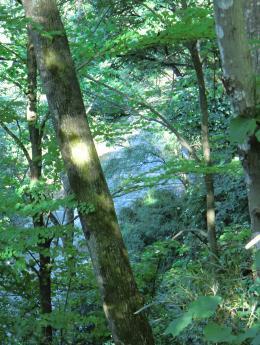 白鳥川を望む断崖